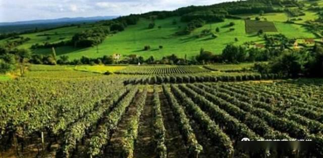 法国酒区知识点罗讷河谷(隆河)基础知识