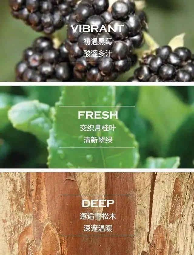 祖马龙这5款香水,哪款才更适合你?