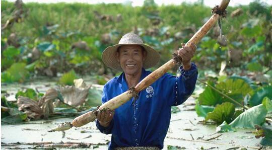 丰收节淘宝助农1个月:联合30万商家卖出8.2亿件农产品
