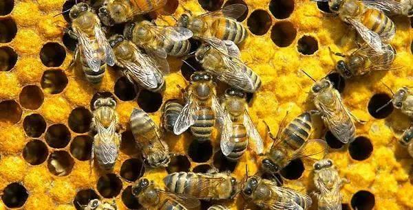 被蜜蜂蛰后 男人想要报复.判一年!