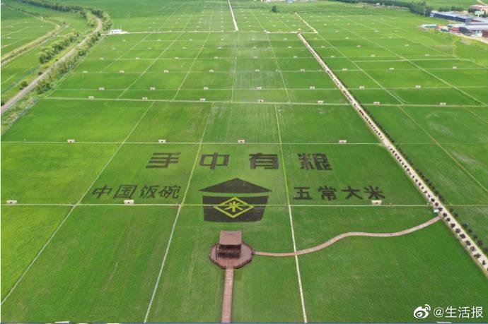 GPS定位稻田画 扮靓中华大粮仓