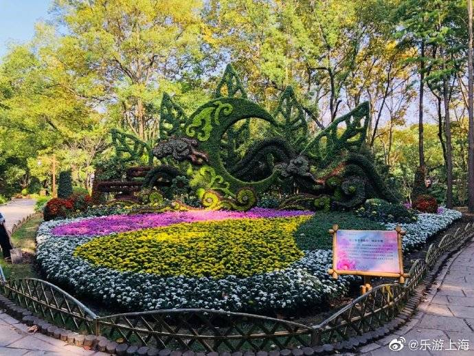 2020上海菊花展今天开幕!15万盆菊花亮相共青森林公园