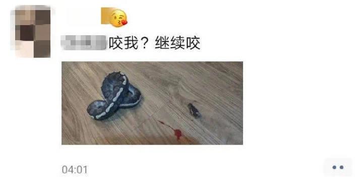 百事3官网宁波男子逗球蟒被咬后剪下蛇头,涉嫌杀害二级保护动物被刑拘 (图2)