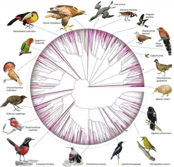 中外科学家合作绘制万种鸟基因组图谱