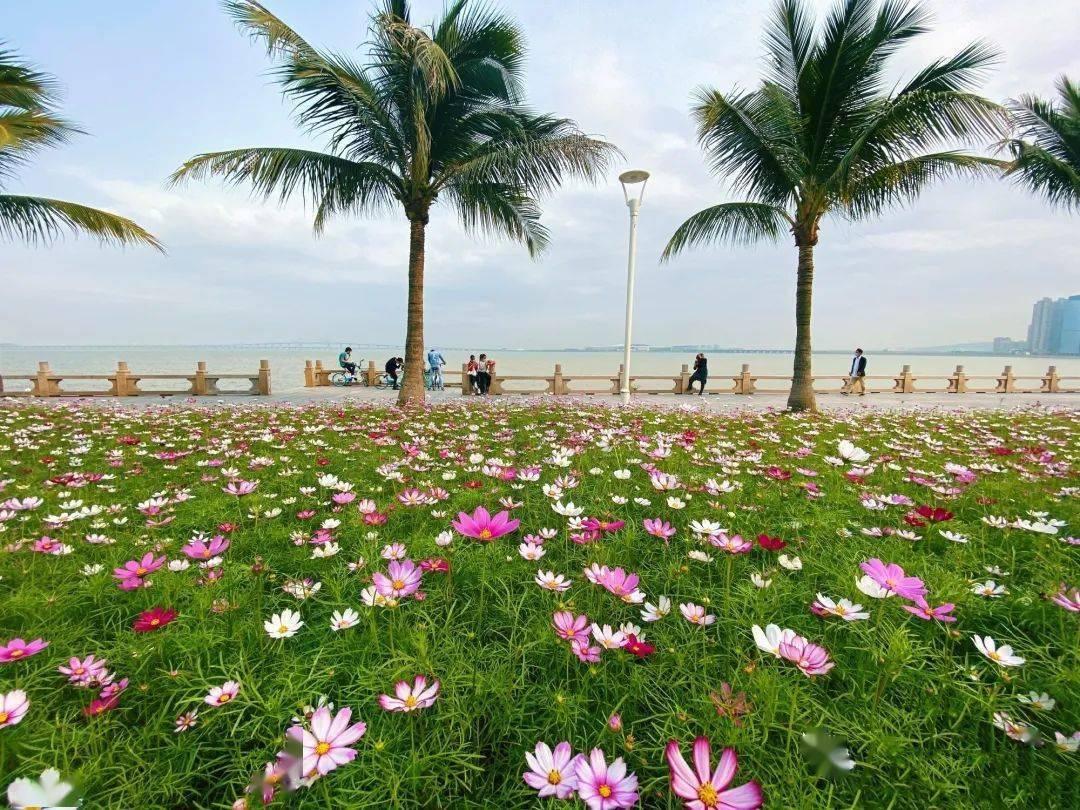 都市频道告诉你来珠海置业的十个理由|第一期:迷人的气候