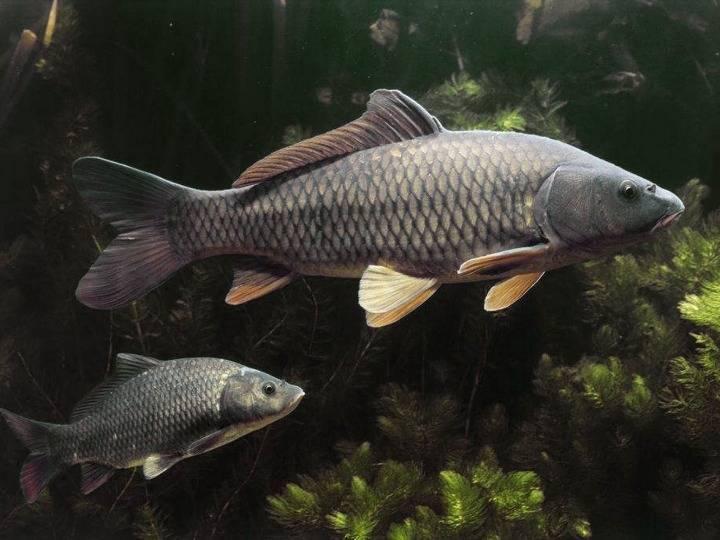 中国科学院院士曹文宣:专注鱼类保护 心系河湖鱼水