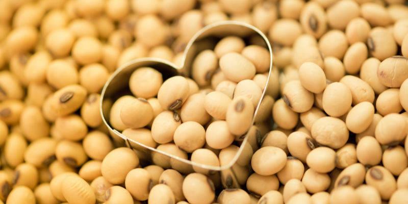 国产大豆涨价风波 谁在退谁在进