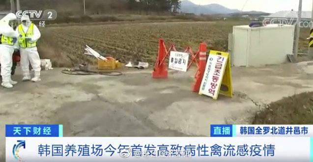 """危机警报升至""""严重""""!时隔2年多,高致病性禽流感疫情又现!韩国扑杀40万只鸡鸭…"""