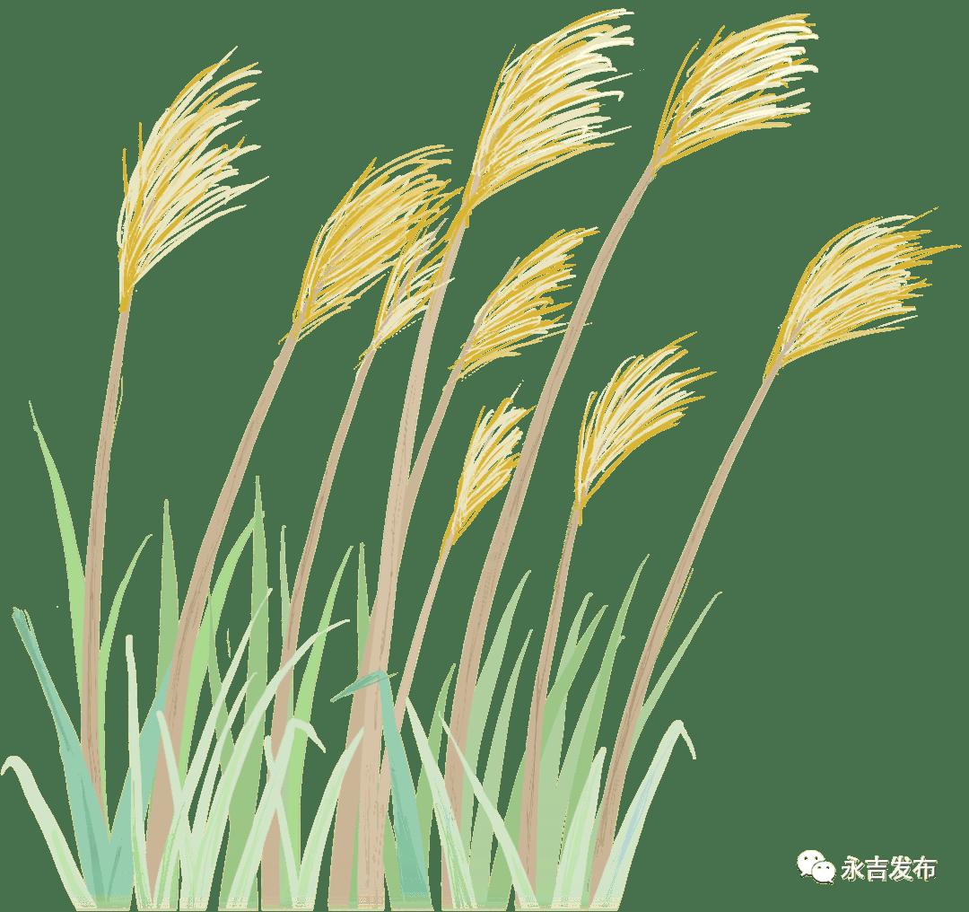 'j9九游会' 【两会回声】永吉县鼎力大举生长绿色生态农业 促进可连续生长(图1)