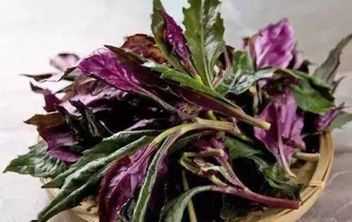 教斗门人在阳台种一盆野菜,十年收益,美味神奇回春菜!