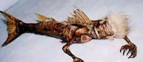 传说中的美人鱼 1975年北海湾捕获的神秘生物,骨骼惊奇,像的不可思议图片