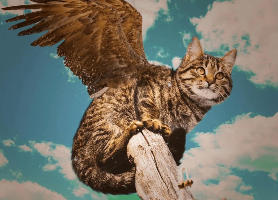 绝育公猫还想骑猫怎么办?