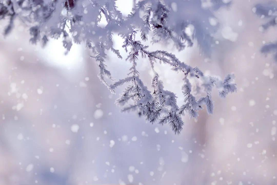 【24节气】今日小寒