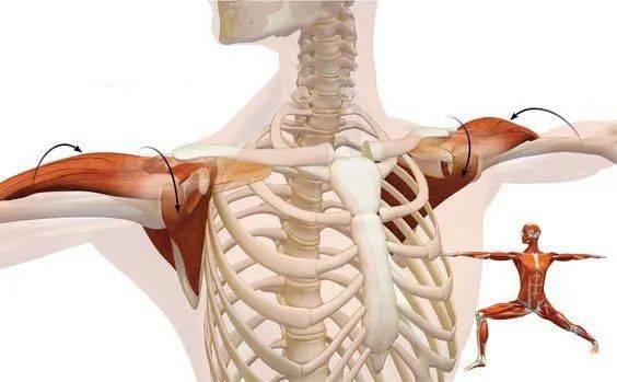 练瑜伽,稳定肩关节的练习,千万别忽视!