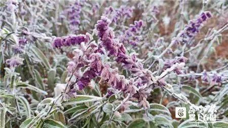 昆明这里下雪了!还有绝美雾凇,据说下周一会更冷…