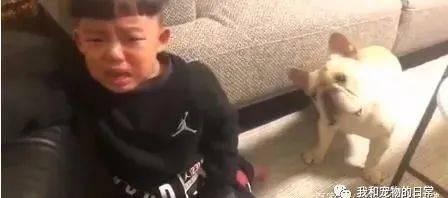 弟弟坐在地上暴哭,结果法斗做出的反应让人忍不住笑出来!