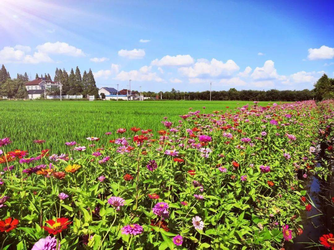 137个!2020年省级农作物病虫害绿色防控示范区看这里