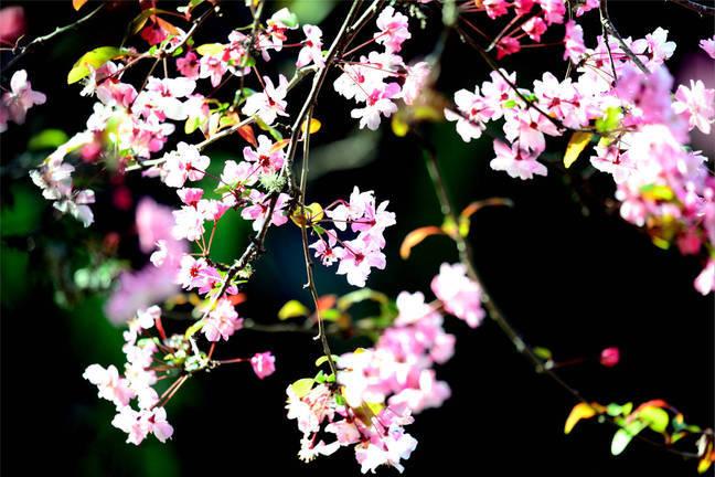 """双柏县""""花漾春天""""主题摄影作品网络展(一)"""