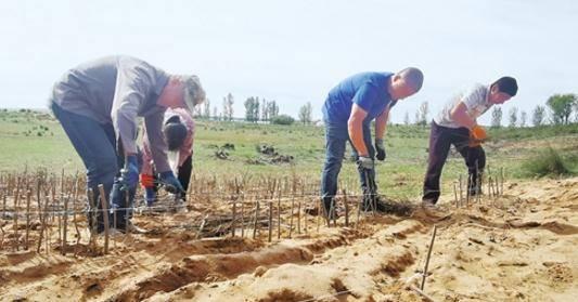 告别黄沙漫天是如何做到的?毛乌素沙地、库布其沙漠荒漠化治理调查