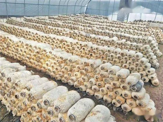 """产业兴 乡村美 农民富——和顺县稳步推进""""三农""""工作"""