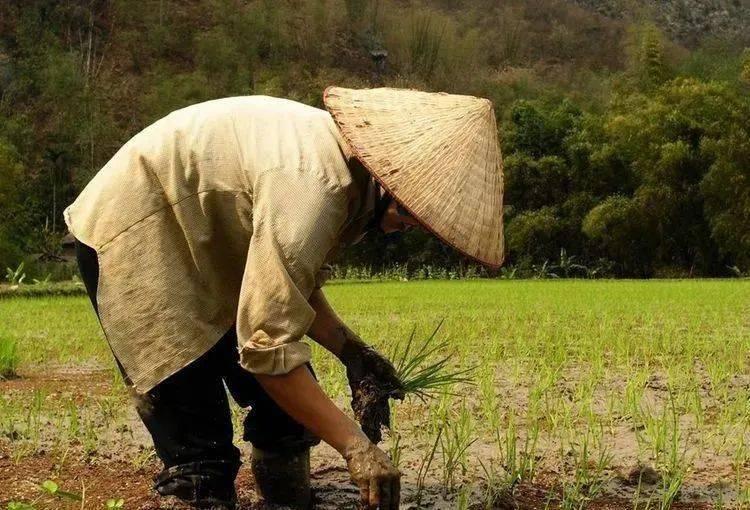 从四十年代到七十年代出生的农村人,生活最苦的,是哪一代  第2张