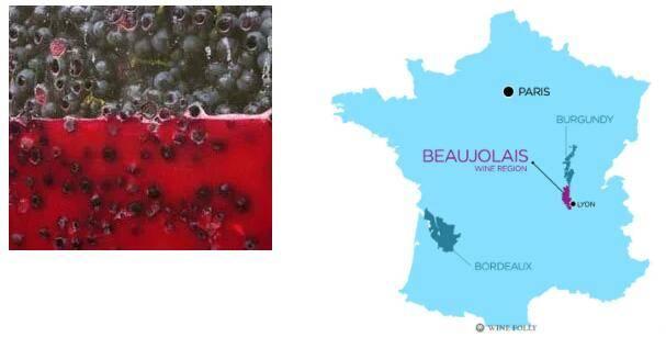 二氧化碳浸渍法发扬于法国薄若莱