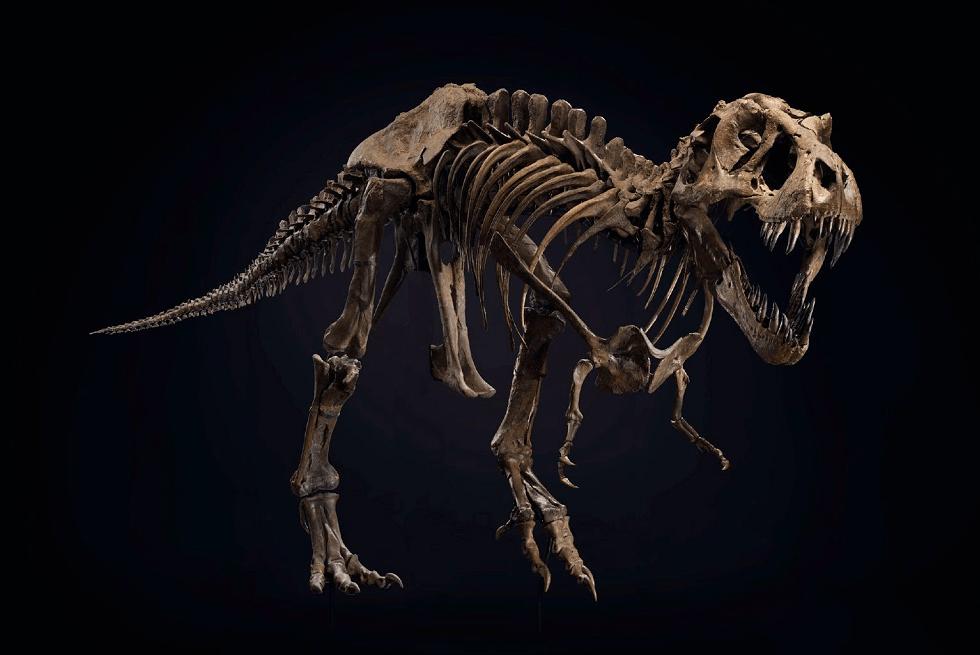 130万的碗、200多万的兔子、XXX万的恐龙,哪个才是最大的黑马?