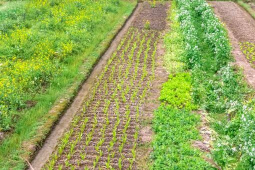 农业补贴找什么部门(地力保护补贴是什么意思)插图(2)
