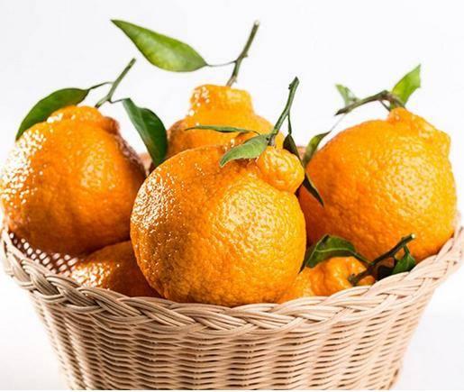 丑橘吃多了会怎样(丑橘真的吃了不上火吗)插图