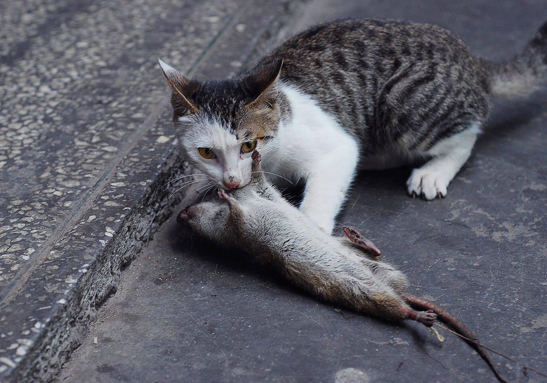 人为什么是视觉动物(视觉动物的含义是什么)插图(3)