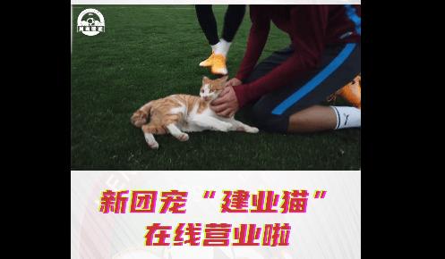 爱心!建业踢中超期间收养流浪猫 送到中牟基地细心照顾