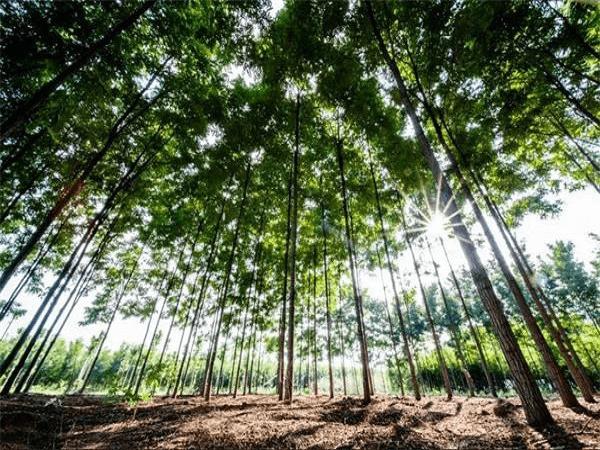 三北防护林让工程区每年增产粮食1058.4万吨