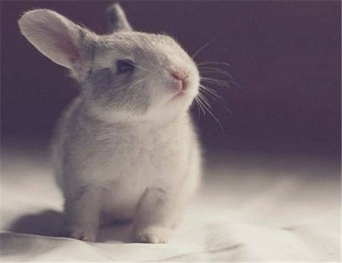 【养宠小知识】耳螨的兔子是很难得的,灰栗兔