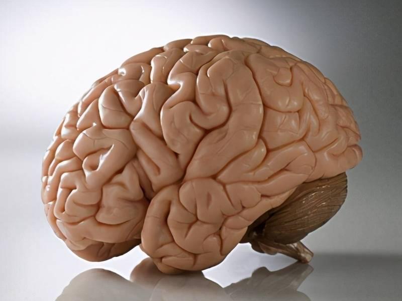 牛牛视频:我国公认的3大健脑食物,每天吃能够预防脑萎缩,别再犯傻避开了