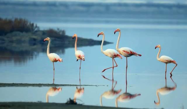 运城盐湖:中国古代科技史上的活化石,野生火烈鸟因何栖息至此?  第8张