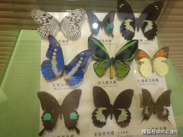 云南有一景点走红,位于大理点苍山下,每年还有蝴蝶会可以欣赏