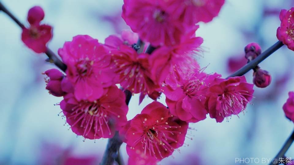 原创             正值赏梅好时节,无锡梅园5000多株梅树盛开,游客为何感叹太堵了