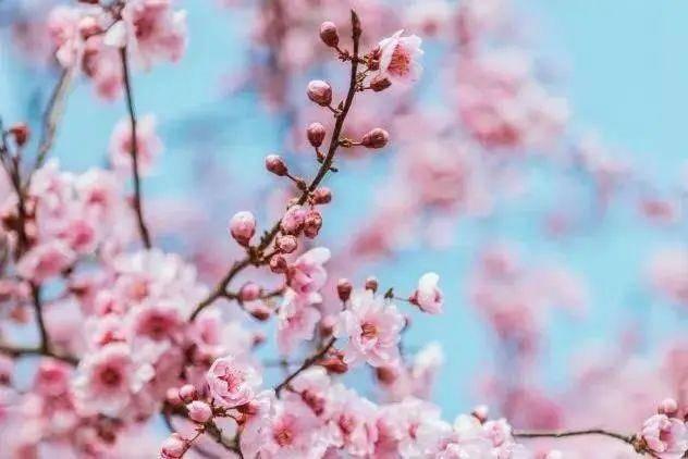 玩足18项惊险项目,还能被众花拥簇!你就是樱花丛中最靓的仔!