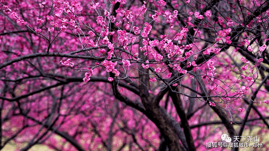 大美尧山,随春天一同醒来!