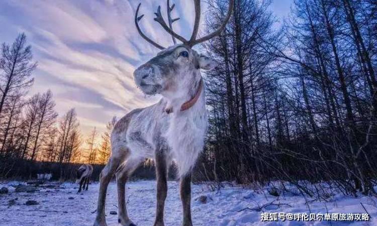 呼伦贝尔大草原冬季旅游穿搭攻略