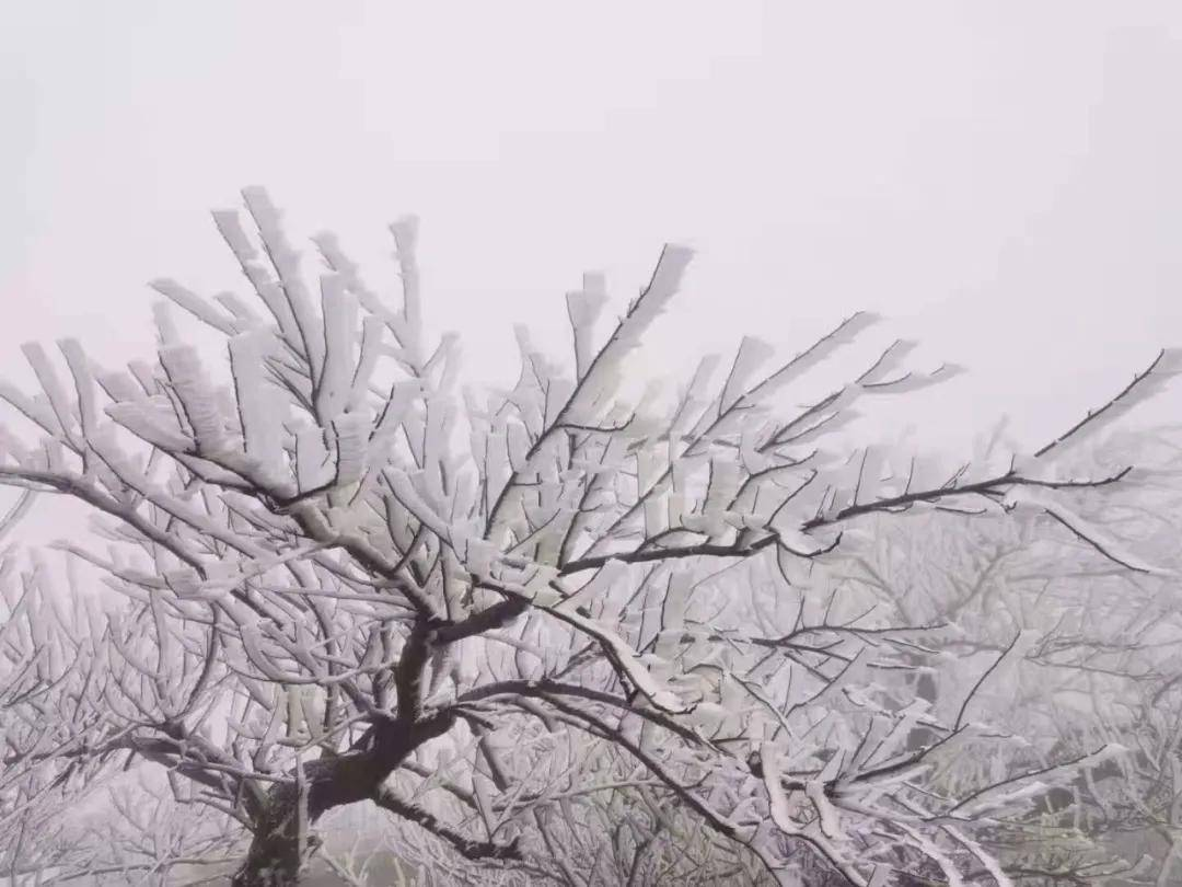 台州今天的这场雾凇,特别的美!周末还能登山去看吗