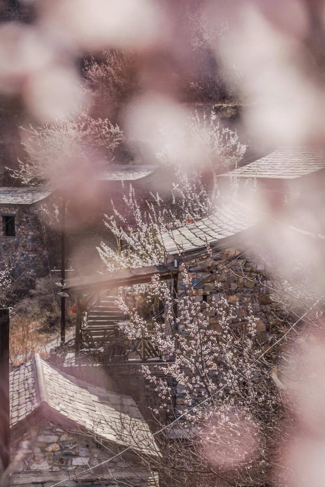 """北京郊区适合遛娃踏青赏花的地方,住坡峰岭桃花屋做山里花间""""桃花仙"""""""