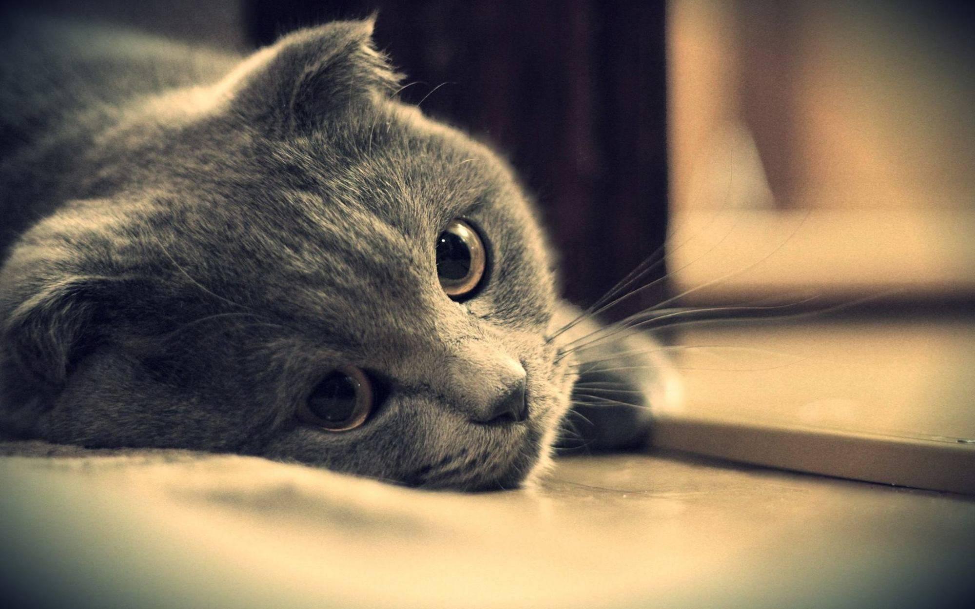 求大佬猫咪破解版分享 猫咪百度网盘分享密码