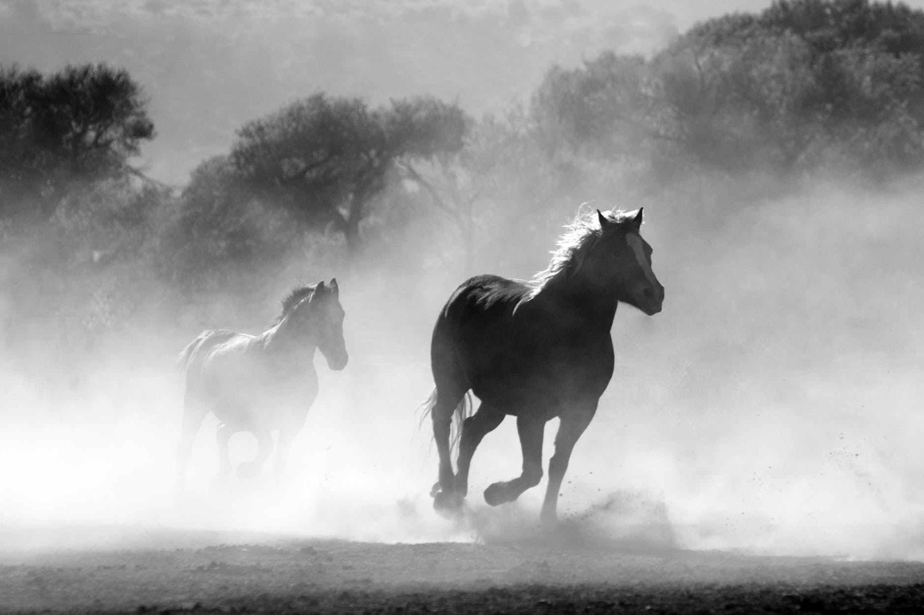梦见一位老者拉的马给 梦到自己拉着行李箱