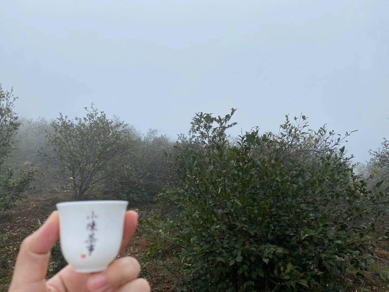 多雨的夏天适合和什么茶  梅雨季节喝什么茶好