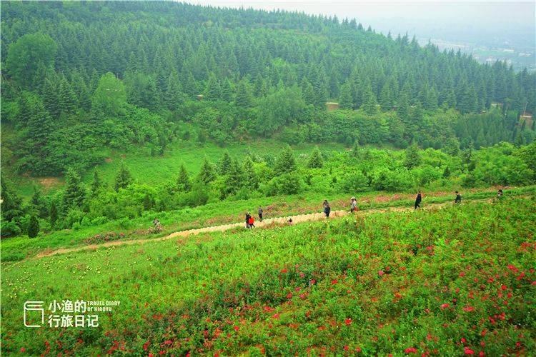 世界最大的植物园,西安秦岭里的秘境,邂逅2000年前诗经里植物