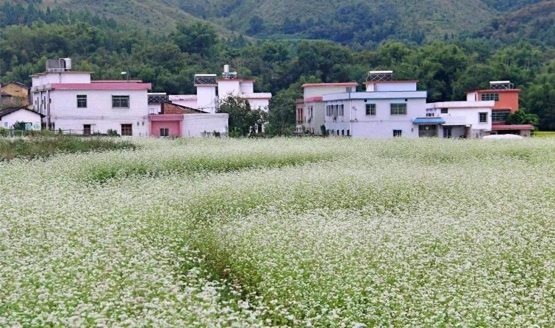 花卉旅游专题(连载之二):产品类型——花卉旅游产品丰富多样