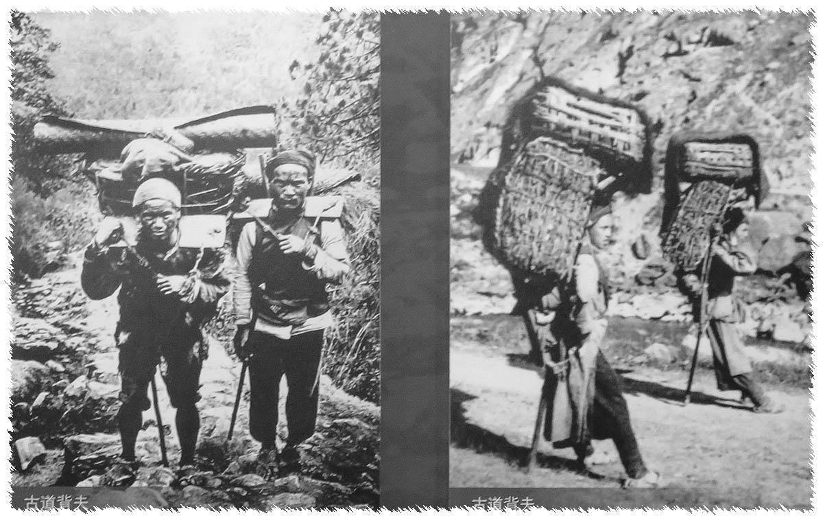 西行漫记·原生云南的神秘树叶,为何影响了历史的进程?
