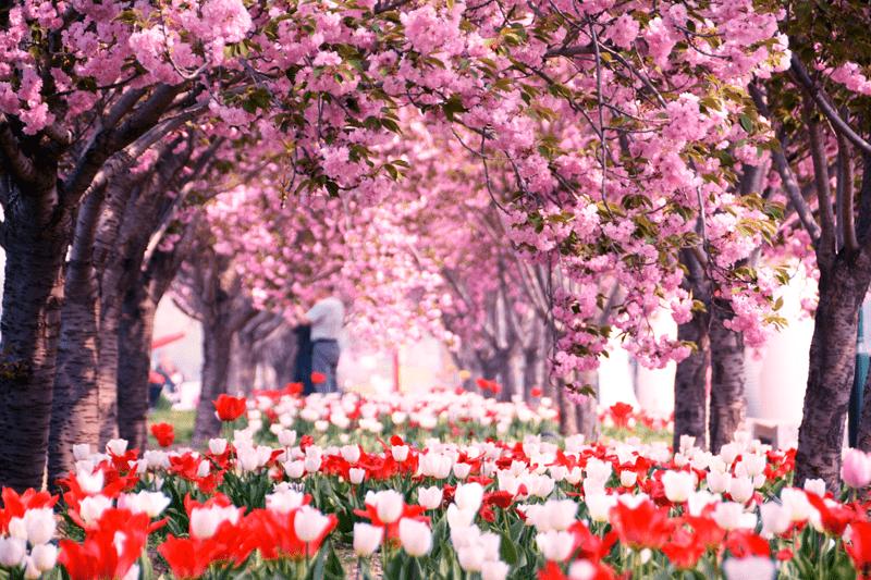 北京国际鲜花港为你打开人间四月天