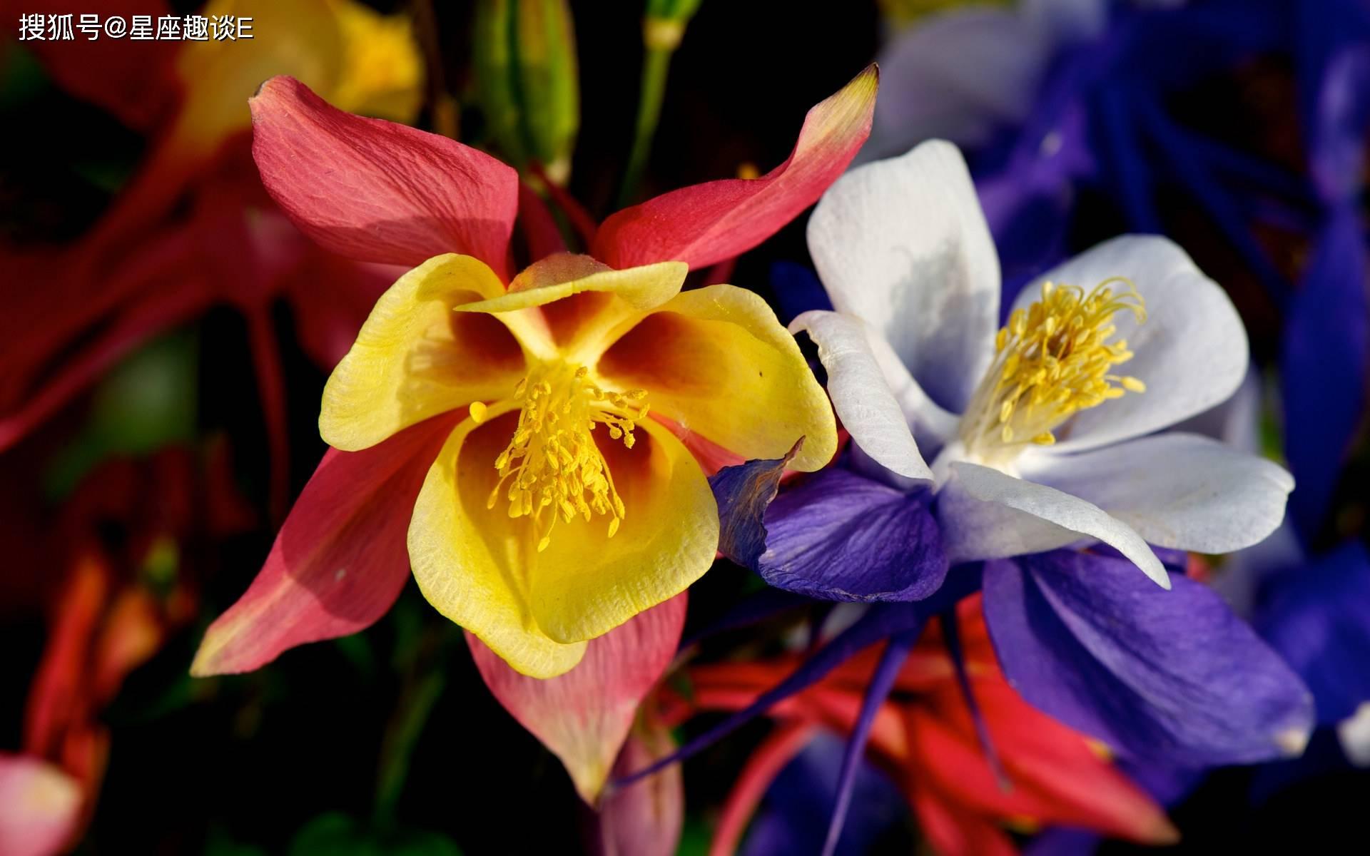 在4月中旬,桃花绽放,真爱涌现,佳人成双的三大星座  第2张